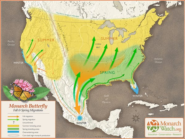 Monargh butterfly migration routes