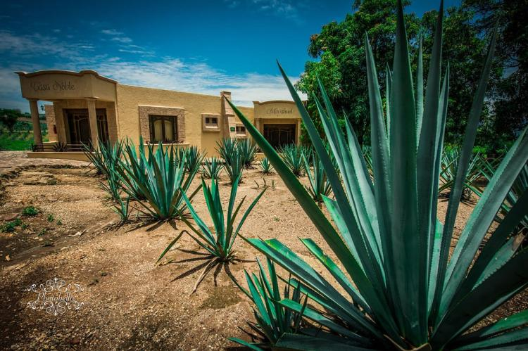 Agave, Tequila, Mexico