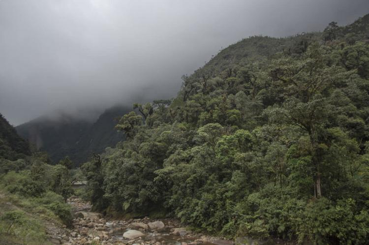 Alto Mayo Protection Forest, Peru