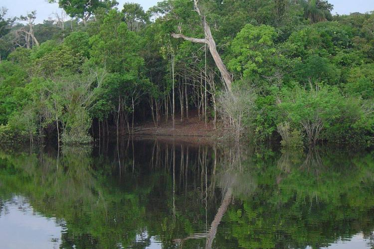 Flooded area in the Amazon Rainforest
