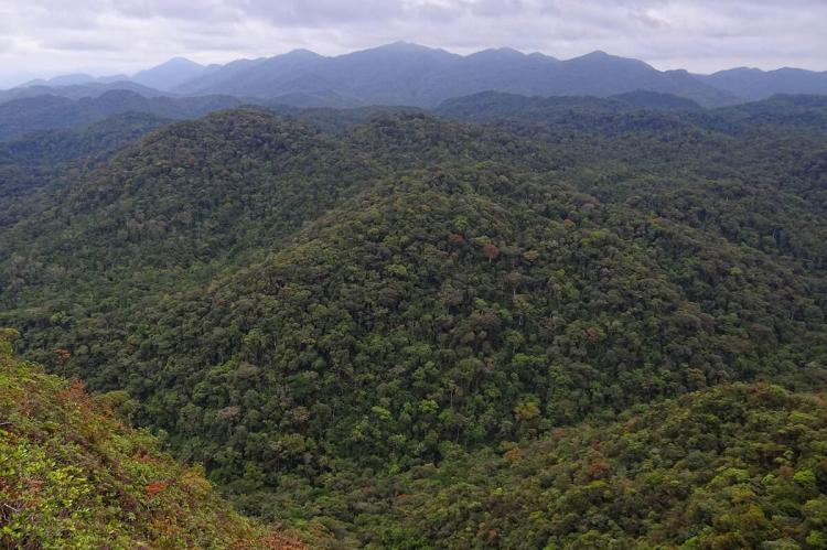 Panorama of Atlantic Forest, Brazil