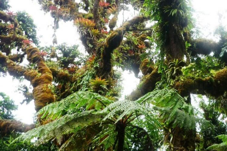 Cloud forest, Cocos Island, Costa Rica