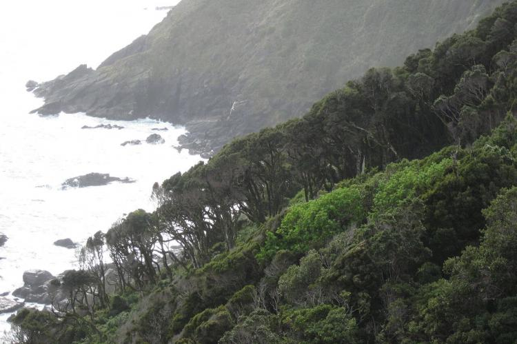 Coastal forest in Área Costera Protegida Punta Curiñanco, Chile