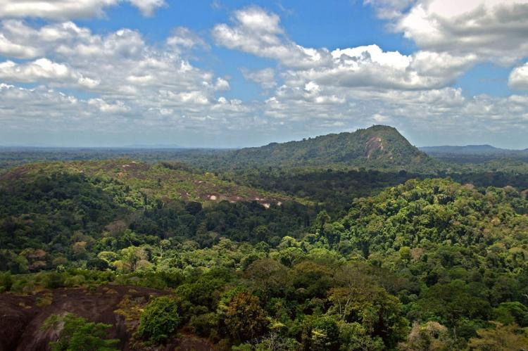 View from summit of Mt. Volzburg, Suriname