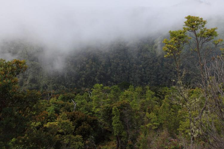 Cloud Forest. Chirripó National Park, Costa Rica