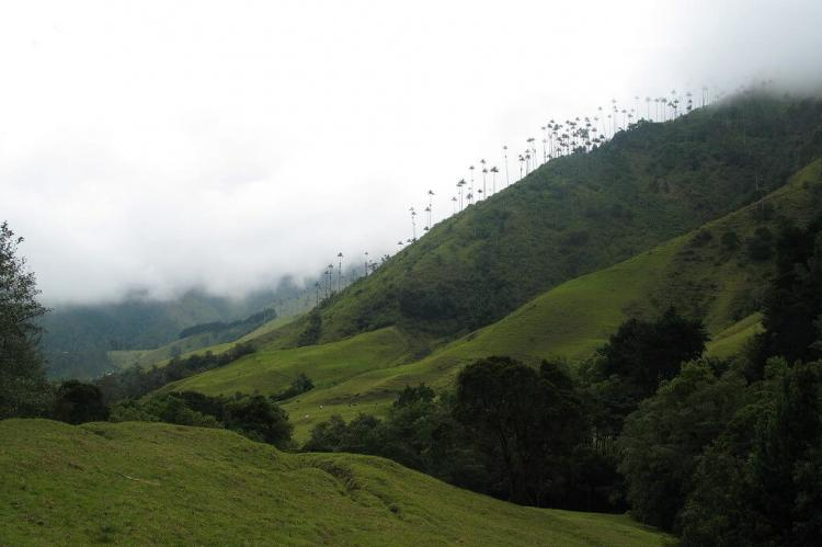 Cocora valley, Coffee Area, Colombia