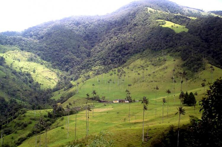 Panorama of the Cocora Valley, Colombia