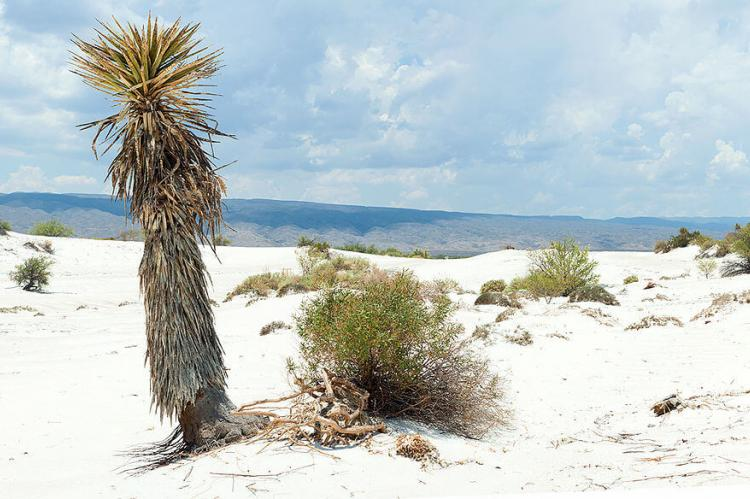 The gypsum dunes, Cuatrocienegas, Mexico