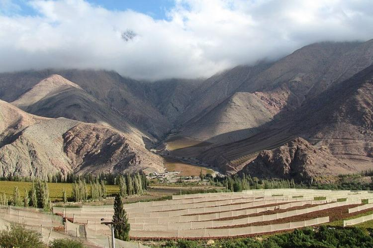 Vineyard terraces, Elqui Valley, Chile
