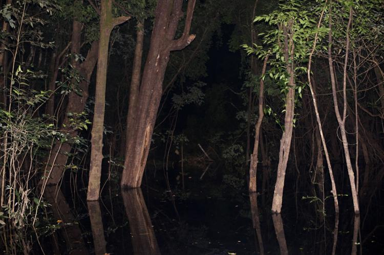 Flooded forest, Jaú National Park (Brazil)