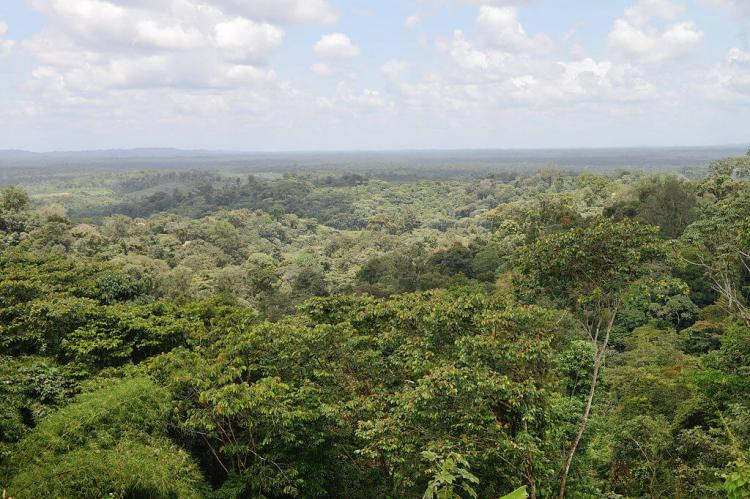 Tropical forest view towards Cacao, French Guiana