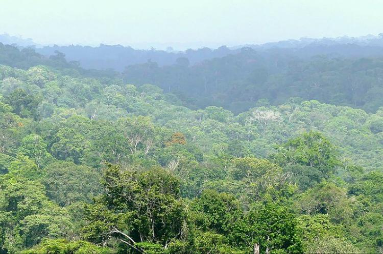 Rain forest, French Guiana