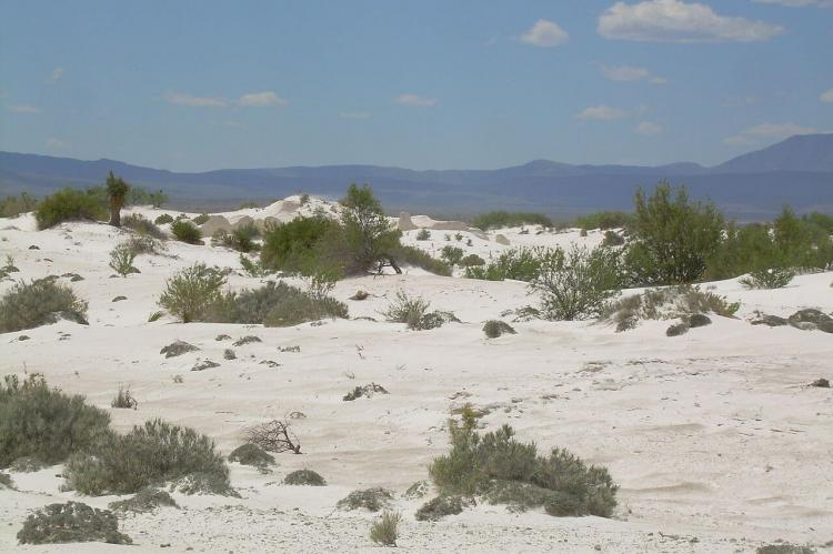 View of Dunas de Yeso in the Cuatrociénegas Flora and Fauna Protection Area, Coahuila, Mexico