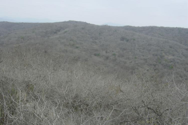 Tropical Dry Forest, Machalilla National Park, Manabi, Ecuador