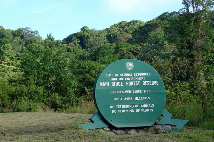 Main Ridge Forest Reserve, Tobago