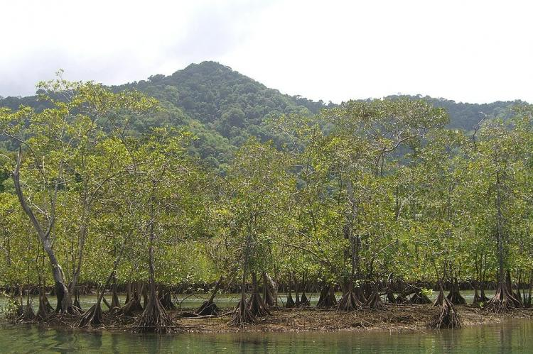 Mangroves in the Utría National Natural Park (Colombia)