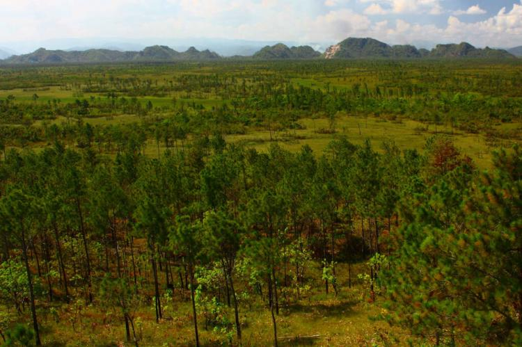 View of the Maya Mountains from fire watchtower with Pinus hondurensis forest