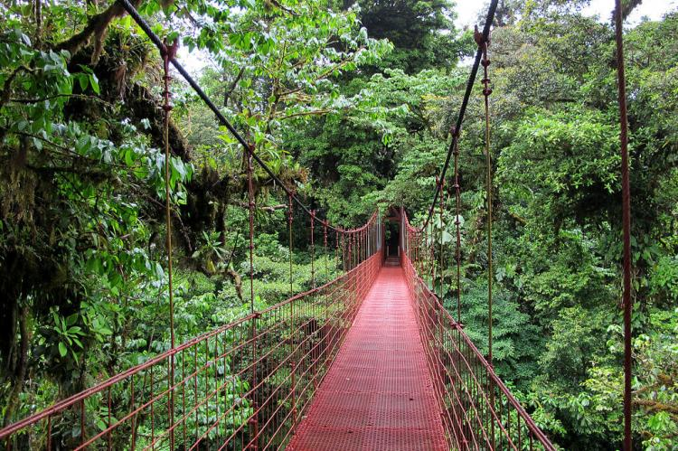 Suspension bridge in the Monteverde Biological Reserve, Costa Rica