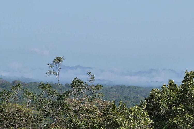 Mist on the rain forest in the early morning in the natural park of French Guiana