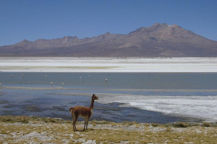 Salar de Surire Natural Monument, Chile