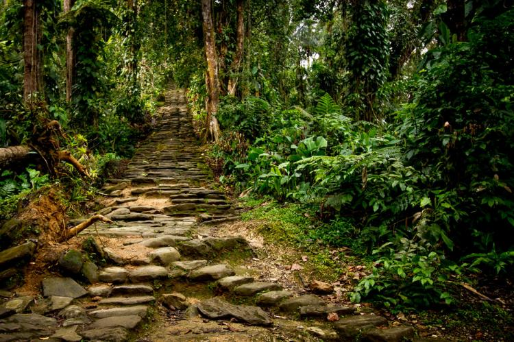 Section of the stone staircase that leads up from the river valley to Ciudad Perdida, Colombia