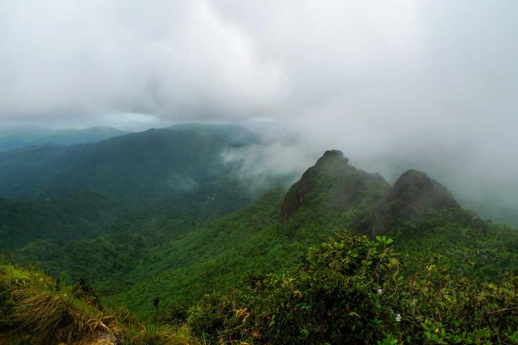 Near the summit of El Yunque, El Yunque National Forest, Puerto Rico