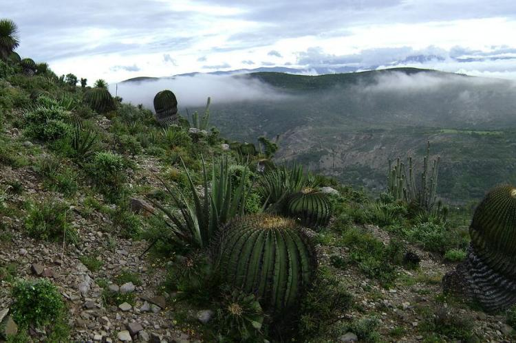 Landscape of the xeric Tehuacán Valley matorral ecoregion, within the Tehuacán-Cuicatlán Biosphere Reserve, Mexico