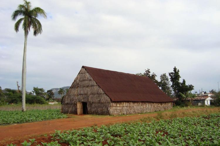 Tobacco Curing Hut and Tobacco Fields - Viñales - Cuba