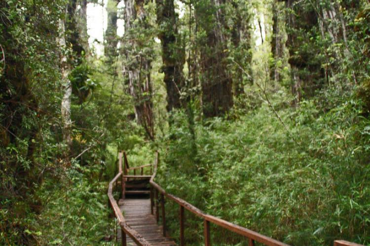 Wooden walkway trail, Alerce Costero National Park, Chile