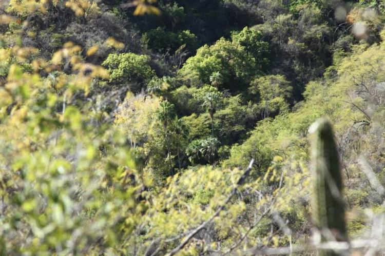 Vegetation of the Sierra de la Laguna including cactus, pine and oak: Baja Peninsula, Mexico