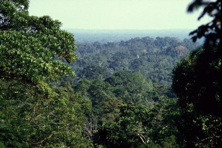 View over Yasuni National Park, Ecuador