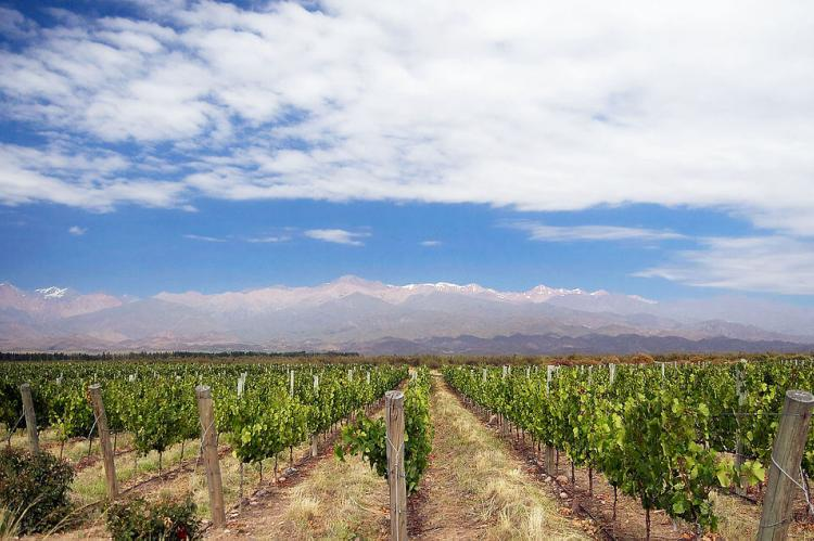 Vineyard near Los Árboles in Uco Valley, Mendoza, Argentina, with the Andes Mountains in the background