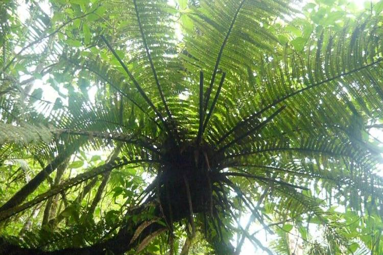 A fern in the El Yunquee rainforest, Puerto Rico