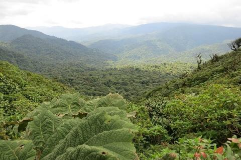 Aerial view of the Monteverde Cloud Forest, Costa Rica