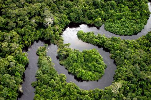 Amazon river floodplain forest