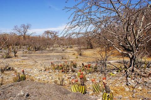 Caatinga vegetation and biome, Brazil