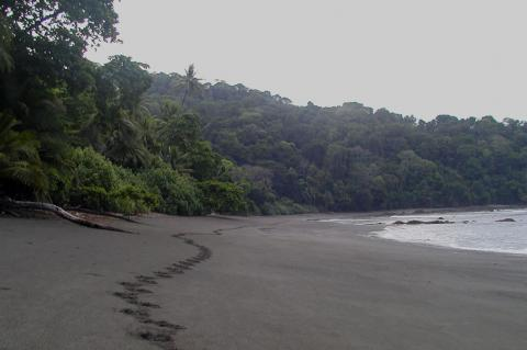 Beach between La Sirena and Carate in Corcovado National Park, Costa Rica