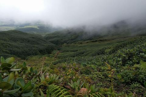 Rain forest highlands, Guadeloupe