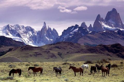 Horses graze in a pasture at the foot of Fitz Roy mountain in Patagonia