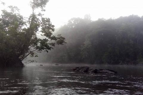 Tumucumaque Mountains National Park in the morning, when low surface temperatures and high humidity cause the appearance of fog, seen from the Jari River
