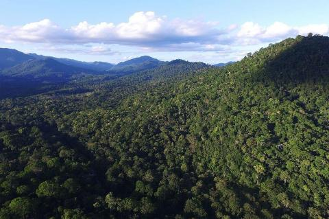 Aerial view of Atlantic Forest vegetation, Camacan, Bahia, Brazil