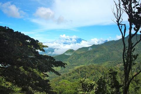 Cloud forest on the Isthmus of Panama