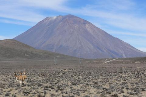 Guanacos with Misti volcano in the background at Aguada Blanca National Reserve