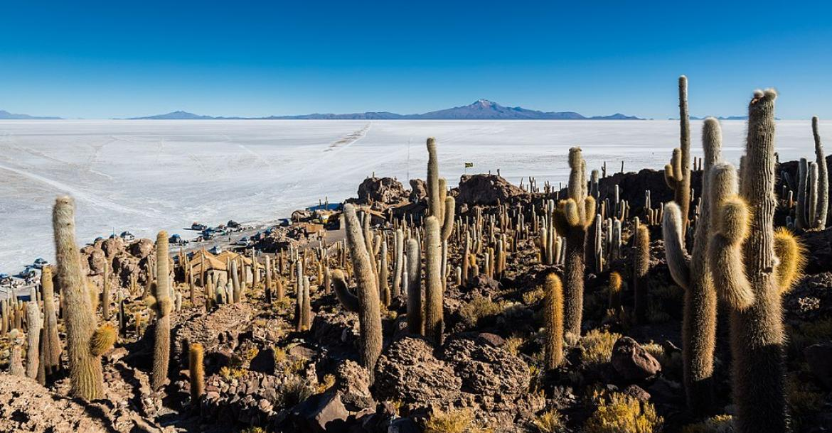 View of the Salar de Uyuni, the surrounding mountains and giant cactuses