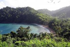 Moist forest at Englishman's Bay, Island of Tobago (Trinidad and Tobago)